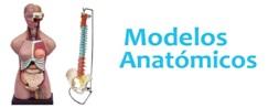 Modelos anatómicos irrompibles para enseñanza